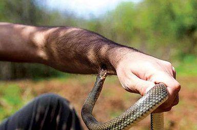 لدغات الثعابين ماذا يجب عليك أن تفعله عند التعرض تجاه لدغات الثعابين الإسعافات الأولية عند التعرض إلى لدغة أفعى سامة الأفعى