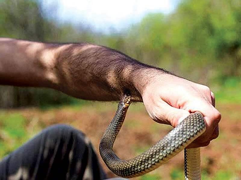 ماذا يجب عليك أن تفعله عند التعرض تجاه لدغات الثعابين
