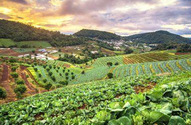ما هي الزراعة المستدامة زراعة المحاصيل المبيدات الحشرية والأسمدة الكيماوية الزراعة الصناعية المزارعون السياسة الزراعية نظام زراعي صديق للبيئة