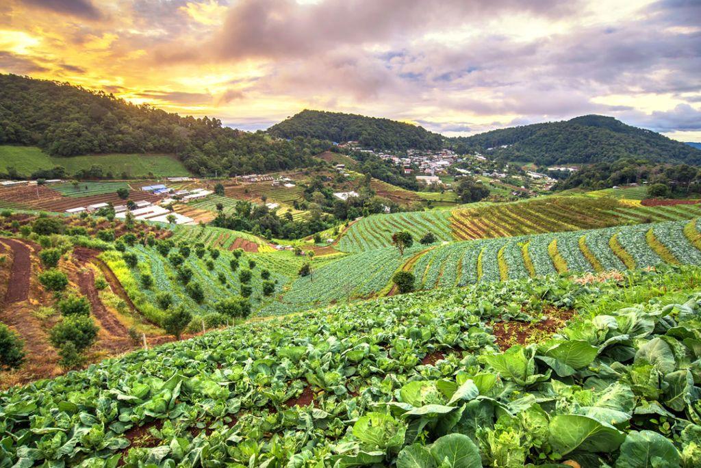 ما هي الزراعة المستدامة ؟