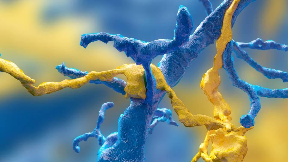 بمساعدة ربع مليون من محبي ألعاب الفيديو، اكتشاف ستة أنواع جديدة من الخلايا العصبية
