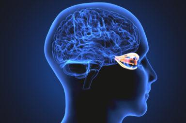 الأعصاب القحفية: العصب المحرك للعين - العصب القحفي الثالث الذي يحرك العينين والأجفان - موقع العصب القحفي المحرك للعين ووظيفته