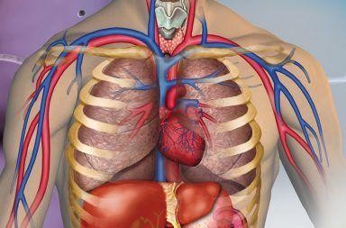 تاريخ التشريح قديمًا التشريح خلال العصور الوسطح علم تشريح جسم الإنسان تشريح الإنسان في العصر الحديث أناتومي دراسة الجسم البشري