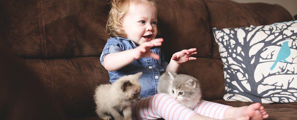 هل تحمي القطط المنزلية الأطفال من الربو أم تتسبب به؟