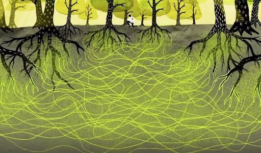 هل تتحدث النباتات إلى بعضها - الحياة الداخلية للأشجار - التواصل بين النباتات - الفهم العلمي للأشجار - هل تتواصل الأشجار مع بعضها