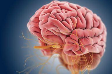 الاعتلال العصبي الوراثي: الأسباب والأعراض والتشخيص والعلاج مرض يصيب الأعصاب الطرفية مرض شاركو-ماري-توث الأعصاب الموجودة في الدماغ والحبل الشوكي