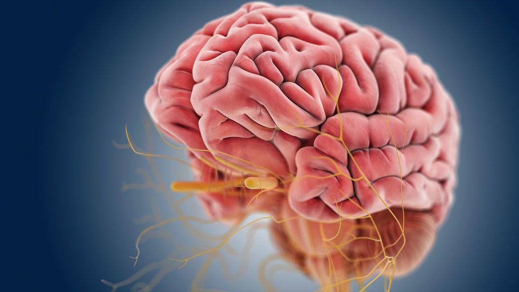 الاعتلال العصبي الوراثي: الأسباب والأعراض والتشخيص والعلاج
