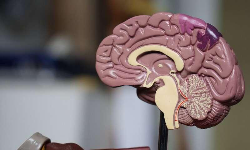اضطراب عصبي جديد يسبب تأخر النمو والصرع عند الأطفال