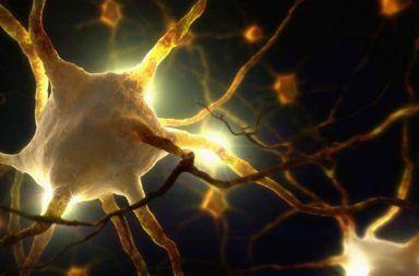 اكتشاف عضو جديد يستشعر الألم في جلد الثدييات عضو حسي يستجيب للألم الميكانيكي خلايا شوان عديدة الأذرع الخلايا الحسية المستقبلة للألم في الجلد