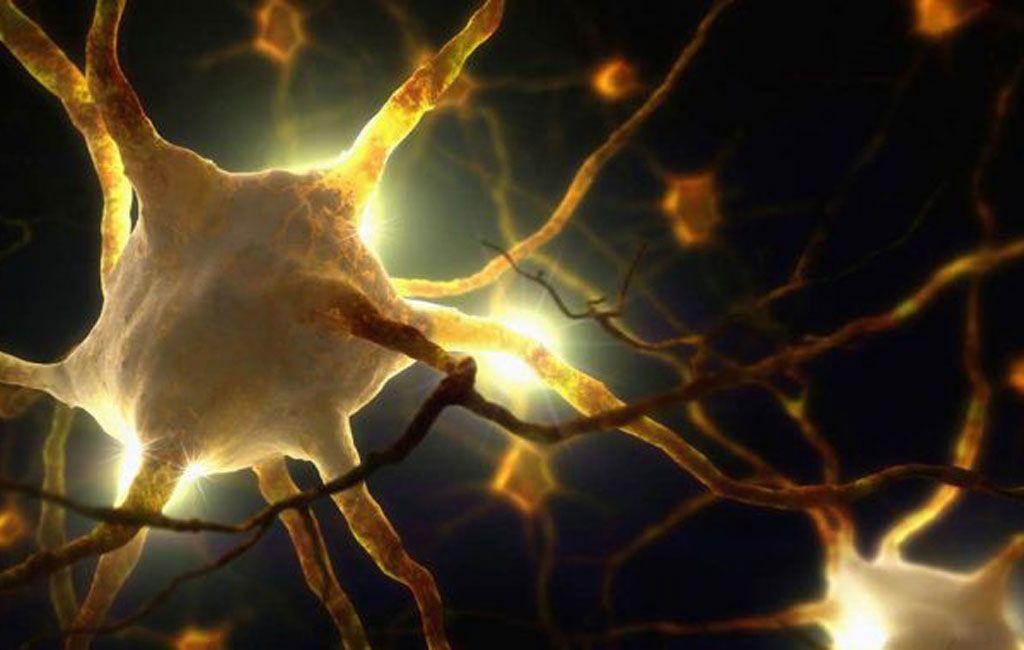 العلماء يكتشفون عضوًا جديدًا يستشعر الألم في جلد الثدييات