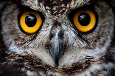 قد تتيح التكنولوجيا الحديثة للإنسان رؤية العالم من خلال عيون الحيوانات - كيفية إدراك الحيوانات لمحيطها - رؤية العالم استنادًا إلى عيون الحيوان