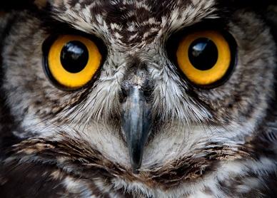 قد تتيح التكنولوجيا الحديثة للإنسان رؤية العالم من خلال عيون الحيوانات
