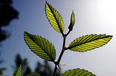 لماذا تحتاج النباتات إلى غاز ثاني أكسيد الكربون التركيب الضوئي بناء الطاقة الأكسجين الغلاف الجوي الهواء ضوء الشمس الكلوروفيل