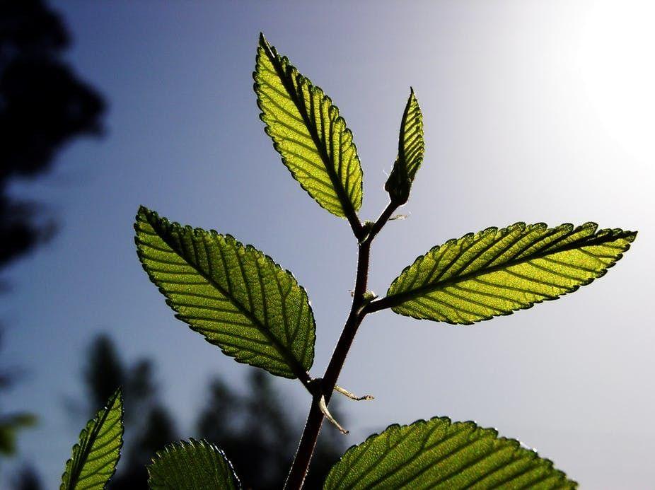 لماذا تحتاج النباتات إلى غاز ثاني أكسيد الكربون ؟