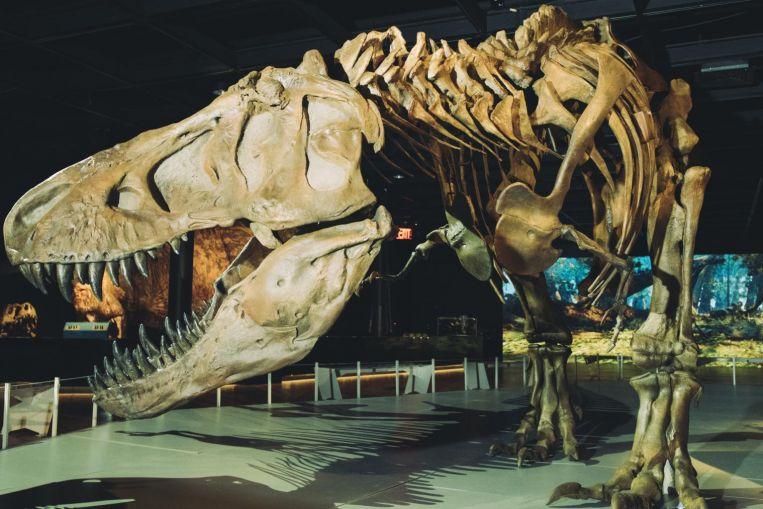 الكويكب الذي قضى على الديناصورات اصطدم بالأرض بزاوية هي الأشد فتكًا